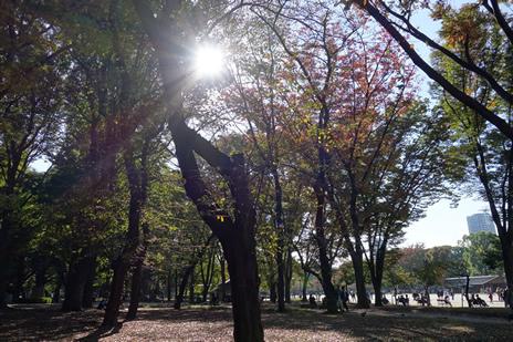 東京藝術大学大学美術館にて11/10(火)より『藝大コレクション展 美の収穫祭』が始まります!上野公園 美術館・博物館 混雑情報他