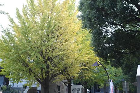 東京国立博物館にて11/10(火)より『台東区の伝統工芸職人展』が開催中!上野公園 美術館・博物館 混雑情報他