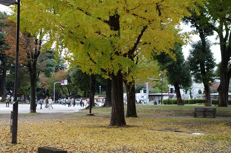 東京国立博物館『アート オブ ブルガリ展』が11/29(日)で終了!  上野公園 美術館・博物館 混雑情報他