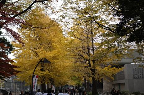 東京都美術館『モネ展』が12/13(日)で終了します!  上野公園 美術館・博物館 混雑情報他