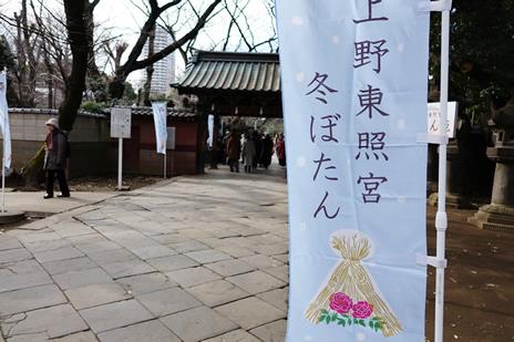 上野東照宮ぼたん苑のぼたんが見ごろです。  上野公園 美術館・博物館 混雑情報他