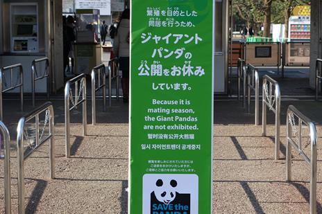 上野動物園 パンダの公開を中止します。  上野公園 美術館・博物館 混雑情報他