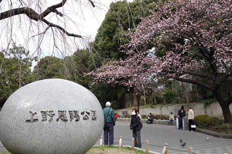国立西洋美術館『カラヴァッジョ展』が3/1(火)から始まります。  上野公園 美術館・博物館 混雑情報他