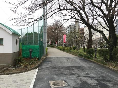 3月28日(月) 蕾が多い隅田公園