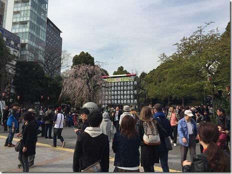 3月31日(木)もうすぐ八分咲きの上野公園
