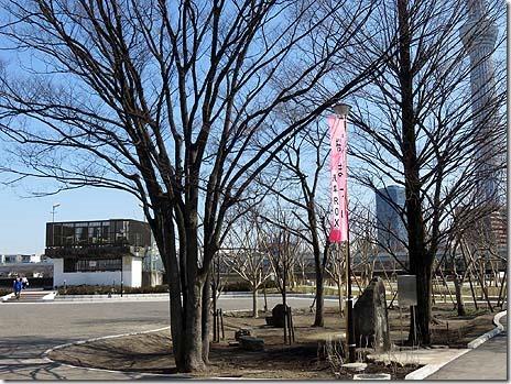 3月22日(火)お花見日和!隅田公園のサクラは?
