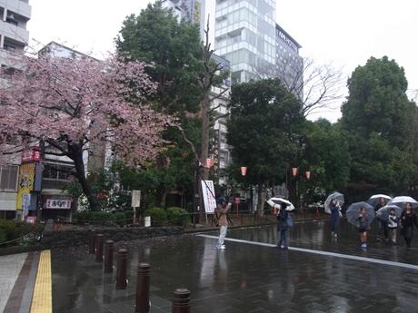 3月19日(土)雨の上野公園