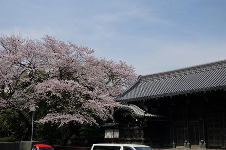 『うえの 桜まつり 』開催中。 上野公園 美術館・博物館 混雑情報他