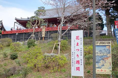 3月29日(火) この暖かさで開花が進む上野公園