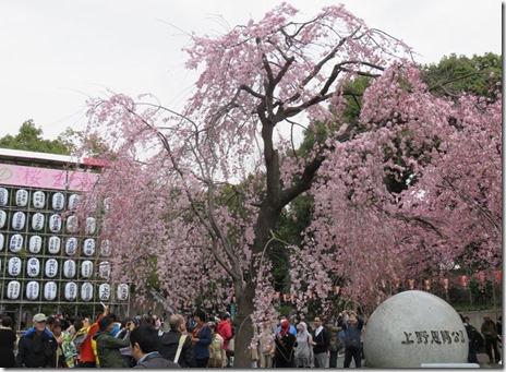 第67回 うえの桜まつり【平成28年3月19日(土)~4月10日(日)】