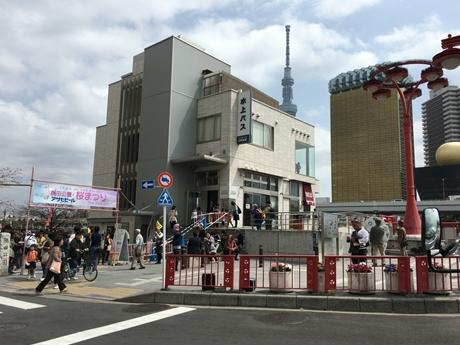 4月1日(金) 隅田公園も八分咲き!?