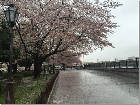 4月7日(木)大雨で誰もいない隅田公園