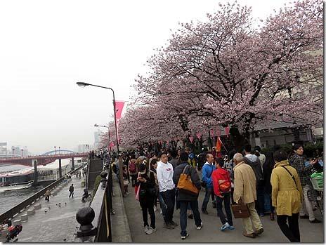 4月3日(日)桜はほぼ満開 雨の週末・・ 隅田公園
