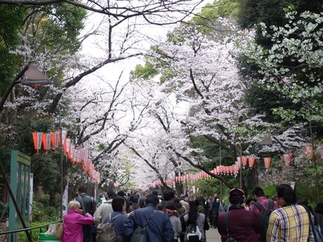 4月2日(土)天気さえ良ければ…!!上野公園