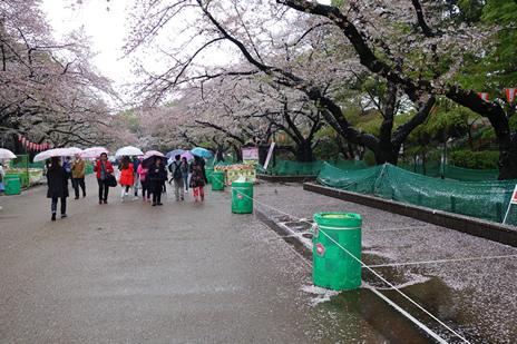 東京国立博物館『黄金のアフガニスタン展』が4/12(火)より開催。 上野公園 美術館・博物館 混雑情報他