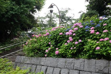 国立科学博物館『恐竜博2016』が12日(日)で終了になります。 上野公園 美術館・博物館 混雑情報他