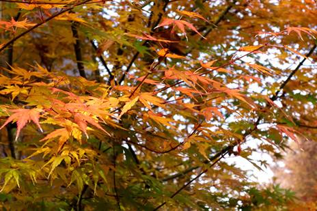 東京藝術大学大学美術館にて『美しさの新機軸 -日本画 過去から未来へ』が12/4日~14日まで開催。 上野公園 美術館・博物館 混雑情報他