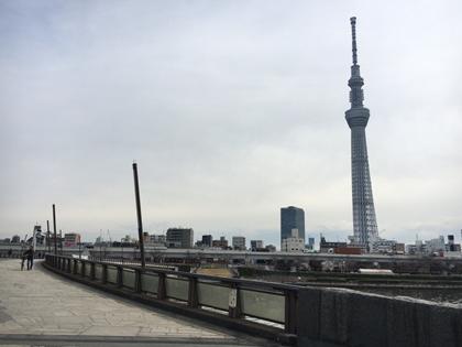 まだまだ蕾!?桜橋からスタート!