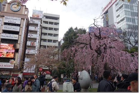 お花見にはまだちょっと寒い。上野公園