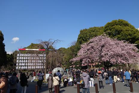 東京国立博物館にて『博物館でお花見を』が3/14(火)より開催。 上野公園 美術館・博物館 混雑情報他