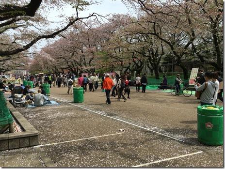 満開!上野公園は雨が降っても宴会スタート