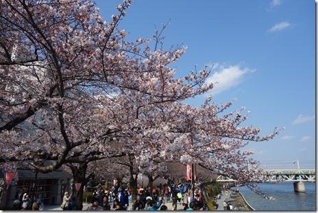 隅田公園は絶好のお花見日和