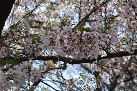 東京都美術館にてブリューゲル『バベルの塔』展が4/18(火)より開催。 上野公園 美術館・博物館 混雑情報他