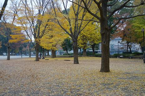 東京国立博物館にて12/5(火)より『刀剣鑑賞の歴史』展が始まります。 上野公園 美術館・博物館 混雑情報他