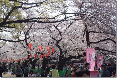 3月28日(水) 春休みの賑わい!上野公園のお花見