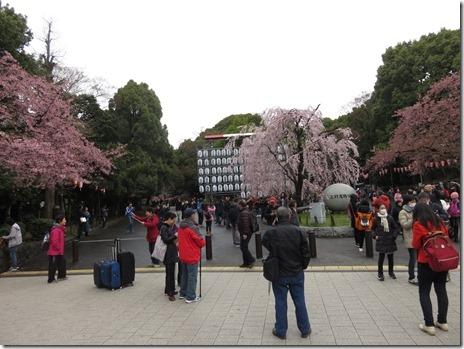 3月22日(木) 上野公園の様子