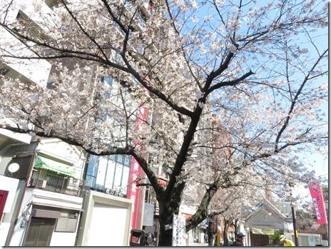 3月25日(日)隅田公園の朝