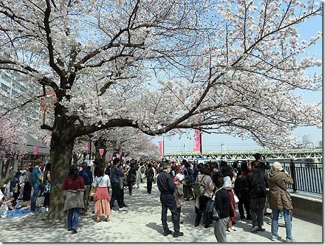 いよいよ満開!お花見日和の隅田公園