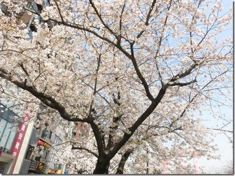 3月29日(木)隅田公園