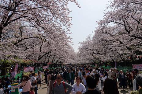 東京藝術大学大学美術館にて3/31より「東西美人画の名作 《序の舞》への系譜」が始まります。 上野公園 美術館・博物館 混雑情報他