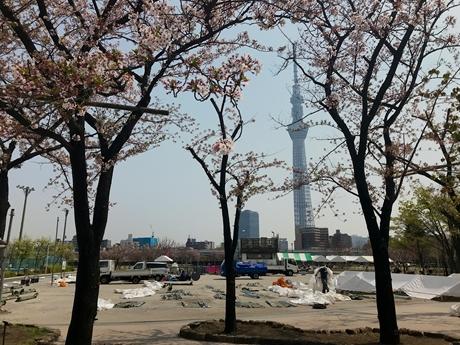 4月2日(月)隅田公園