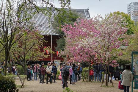 東京国立博物館にて開催中の「博物館でお花見を」が4/8で終了します。 上野公園 美術館・博物館 混雑情報他