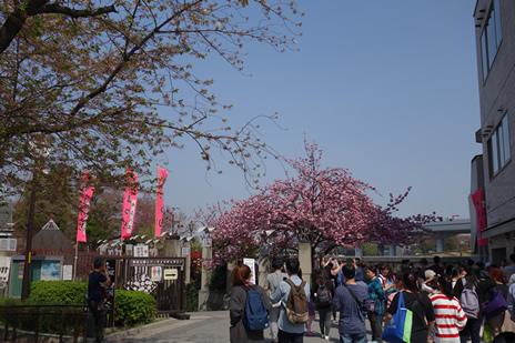 04月04日(水)葉桜になりました。