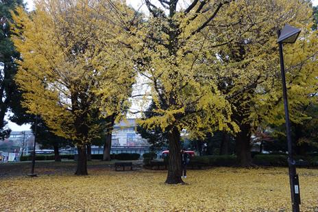 東京国立博物館にて開催中の『特別展「京都 大報恩寺 快慶・定慶のみほとけ」』が12/9(日)で終了します。 上野公園 美術館・博物館 混雑情報他