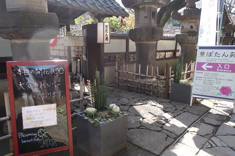 上野・東照宮のぼたん苑にて開催中の『冬ぼたん』が2/24(日)で終了します。 上野公園 美術館・博物館 混雑情報他