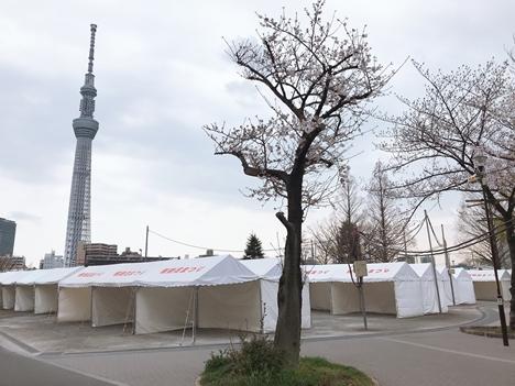 03月28日(木)雨がポツリ… 隅田公園