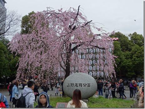 3月23日(土)上野公園のお花見レポート