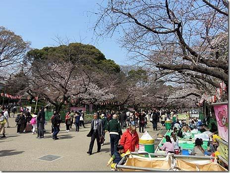 3月25日(月)場所取りスタート 上野公園の桜