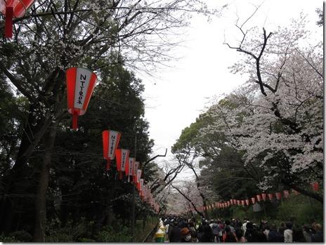 3/31(日)平成最後の3月の上野公園