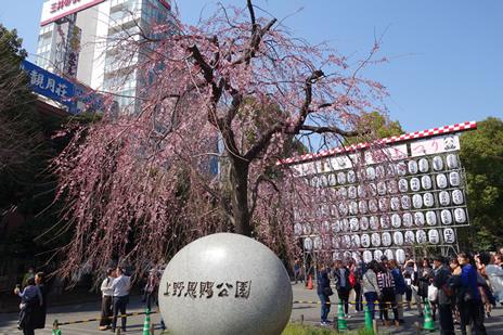 3月20日(水) 2019年お花見探検隊スタートです!