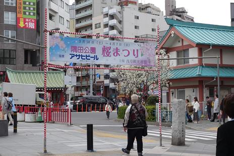 3月22日(金) 隅田公園の桜の様子
