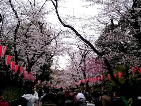 3/29(金)花冷えの上野公園