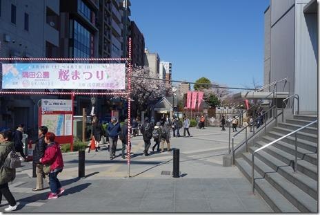 4月3日(水)ちょっと寒いけど見ごろ 隅田公園
