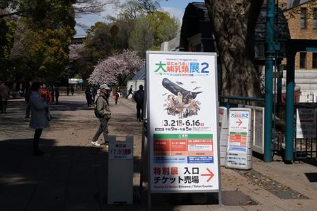 国立科学博物館にて4/9(火)より『ビーズ -自然をつなぐ、世界をつなぐ-』展が開催中。 上野公園 美術館・博物館 混雑情報他