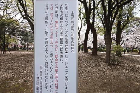 桜満開。 上野公園 美術館・博物館 混雑情報他