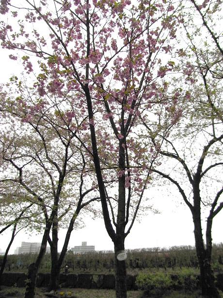20080411_003.jpg